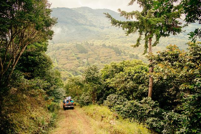 "armers drive through the ""coffee lands"" of El Salvador, November 6, 2013. (Photo: Stuart)"