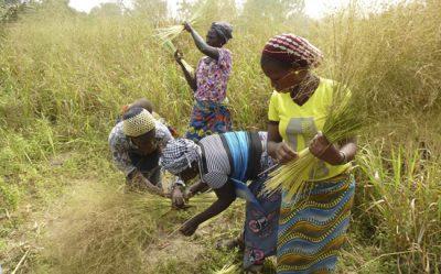Alaffia Grass Harvesters