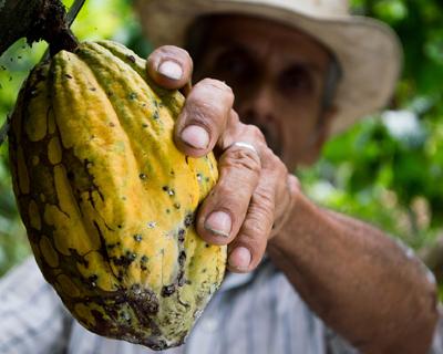 Cocoa farmer in Colombia