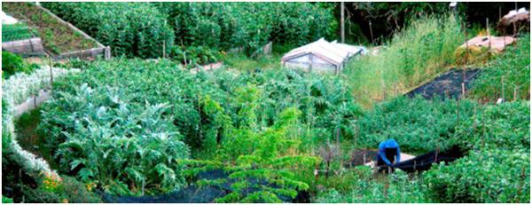 Regentarians Unite - Terraced Garden