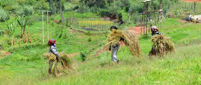 Coop Coffees, women work in the fields.
