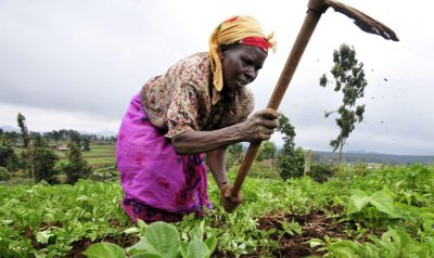 Woman farmer hoeing crops