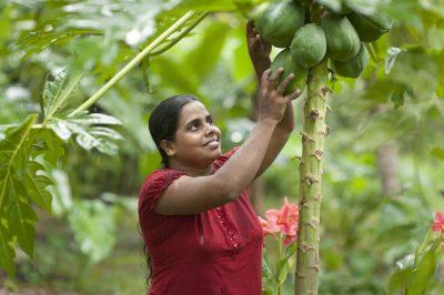 Woman picks Papaya - Serendipol - Dr Bronner