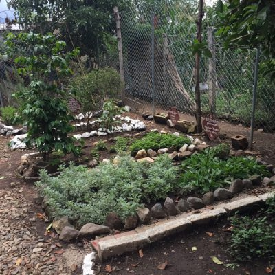 Herbal Garden in Guatemala