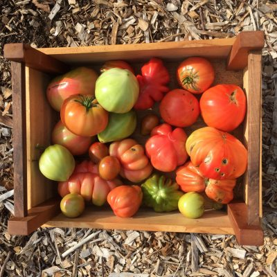 photo of heirloom tomatoes in wooden crate