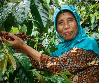 fair trade coffee indonesia
