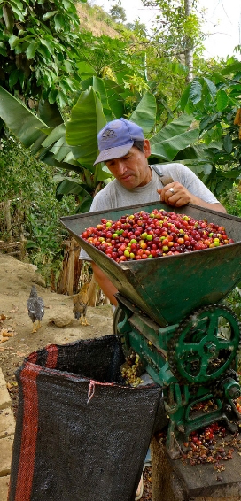 Fair Trade Certification Report: Fairness for Farmers