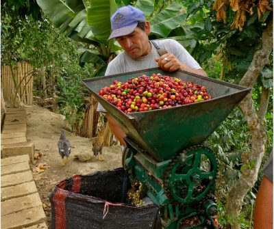 Fairtrade Coffee Farmer, Equal Exchange