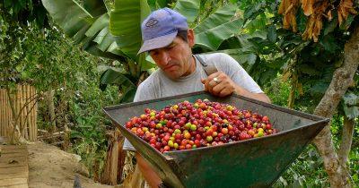 Fairtrade Coffee Farmer Peru Equal Exchange