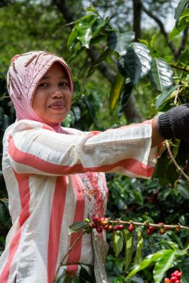 Coffee Farmer Indonesia - Fairtrade International