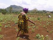 Small Scale Farmer - Keeping the Struggles of Peasant Women Alive