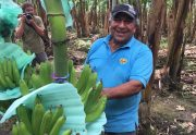 Small Scale Farmer Don Hugo Shows off his Banana Harvest