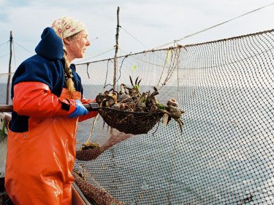 Picture of woman catching crab – Northwest Atlantic Marine Alliance – Real Meals Issue 18