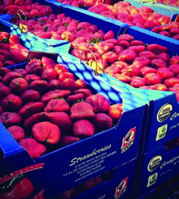 SWANTON BERRY FARMS ORGANIC STRAWBERRIES - Issue 18 Product Pick