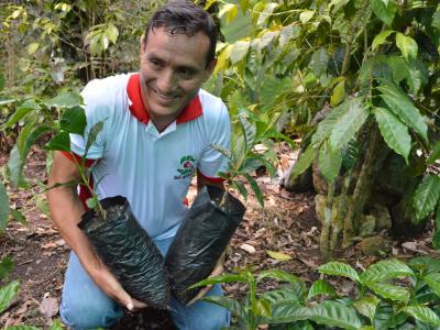 Gerardo Goicochea holding coffee plants in Peru - Cooperative Coffees