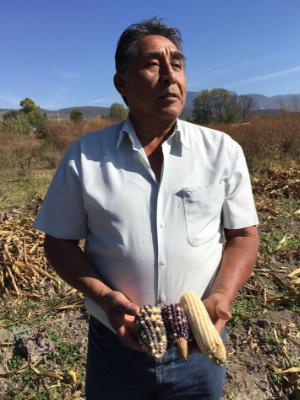 Corn Farming- Moises Fuentes, Mexico