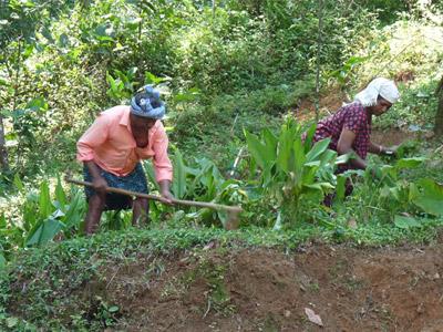 Members of Fair Trade Alliance Kerala tending crops
