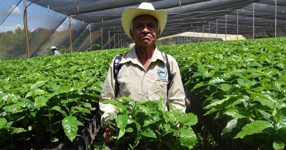 CESMACH Fair Trade Coffee Nursery